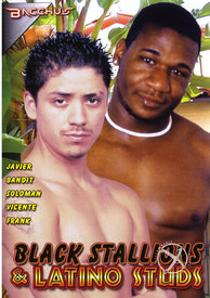 Black Stallions And Latino Studs